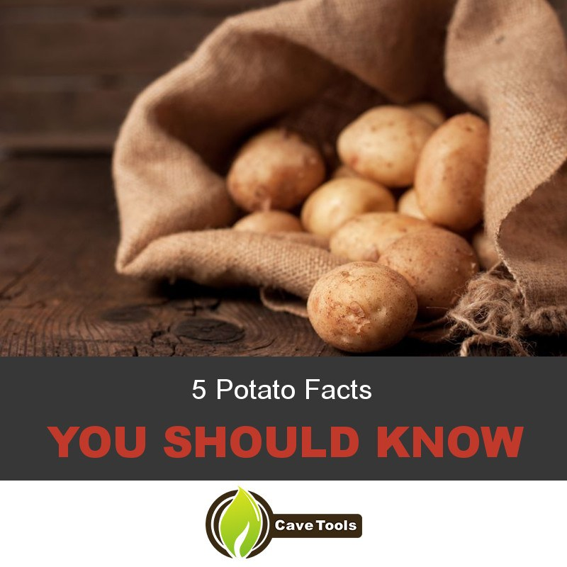 5 Potato Facts You Should Know