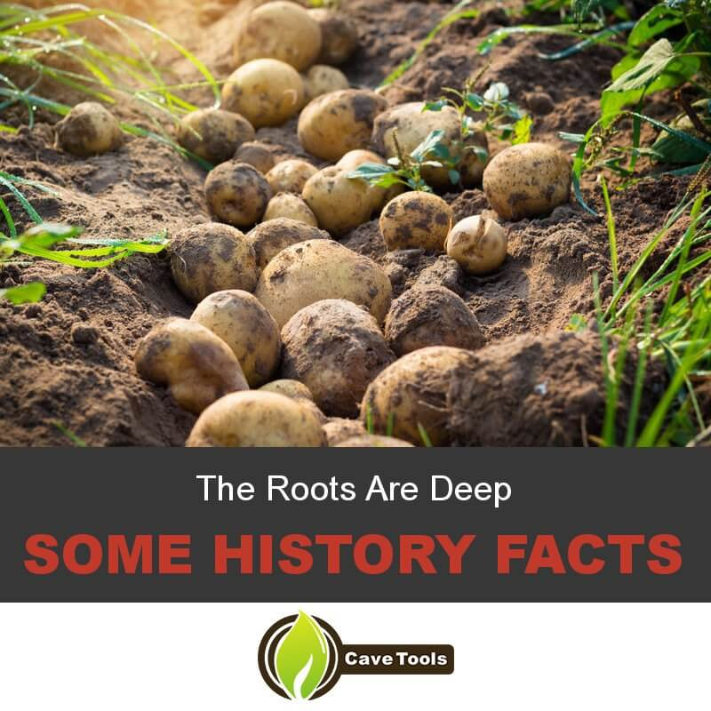 The Roots Are Deep Some History Facts