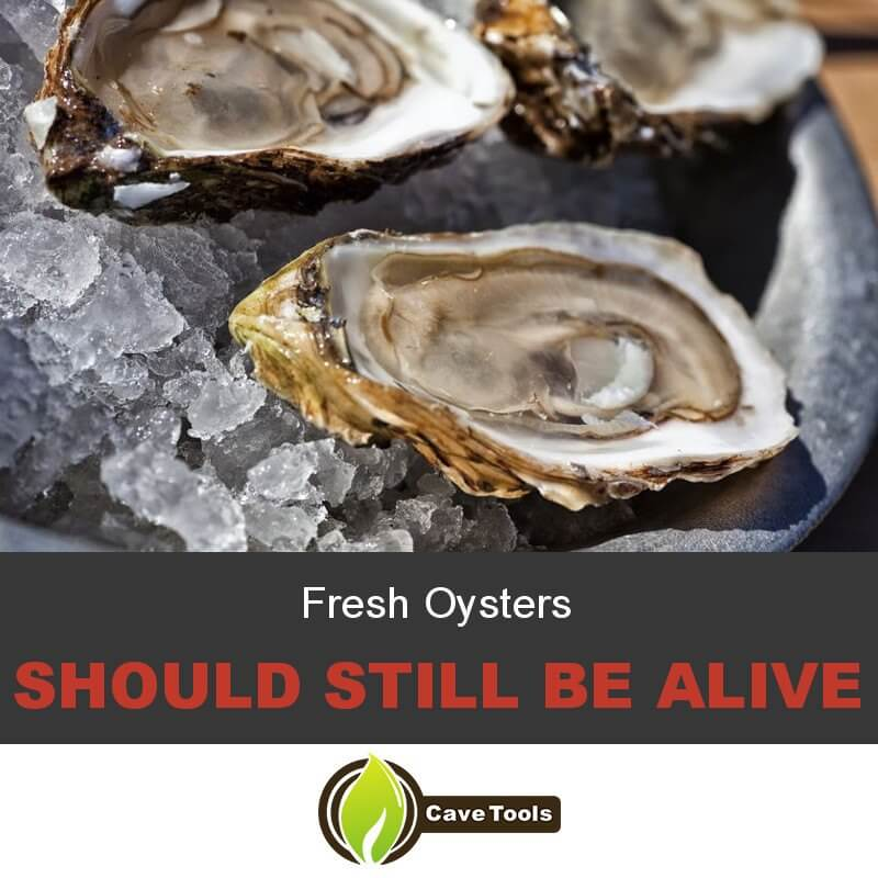 Fresh Oysters Should Still Be Alive