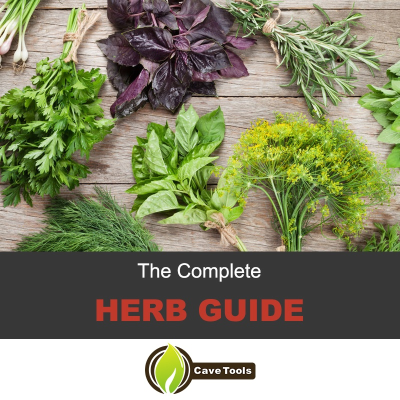 The complete herb guide